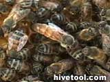 Hivetool.com Guide to Beekeeping